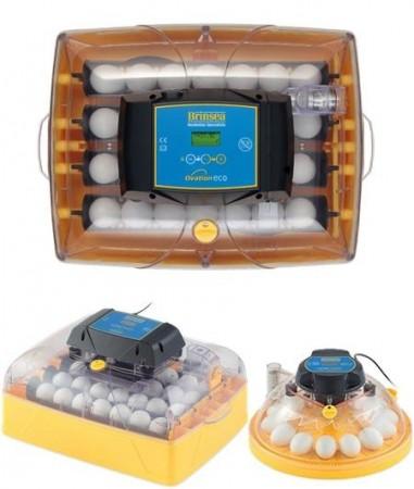 10-100 egg